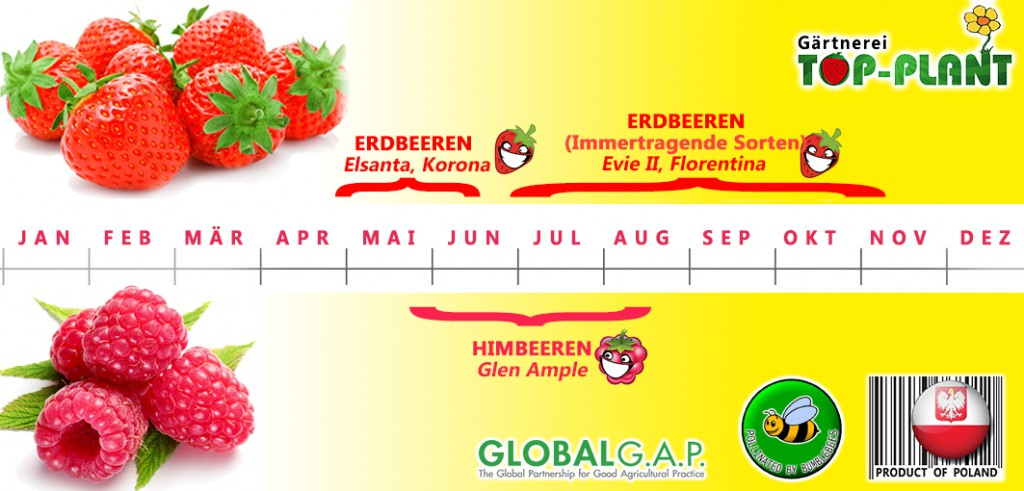 TOP-PLANT_fruit_callendar_x6a - DE