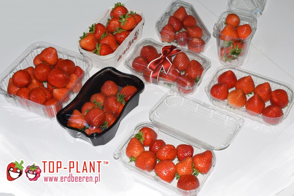 Erdbeeren Großhandel