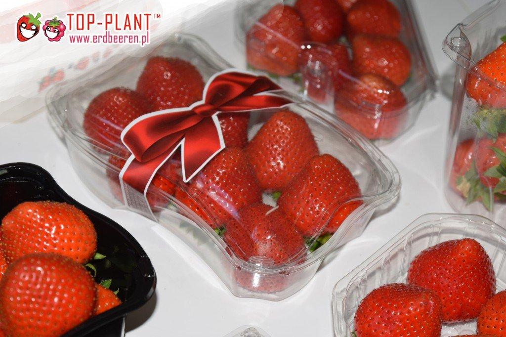 Produzent von Erdbeeren