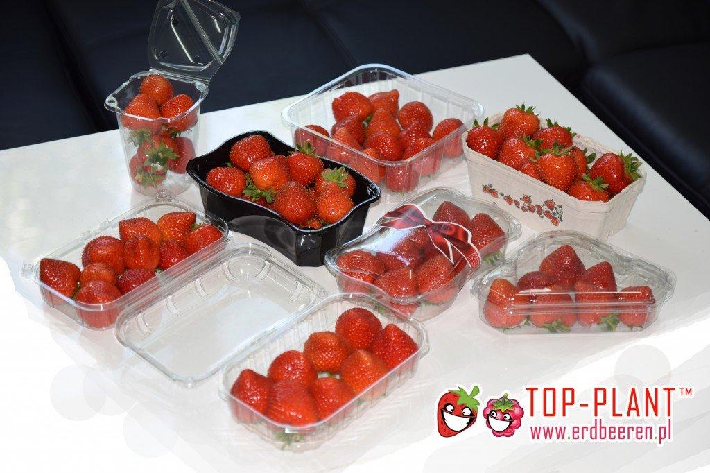 Erdbeeren - Hersteller TOP-PLANT