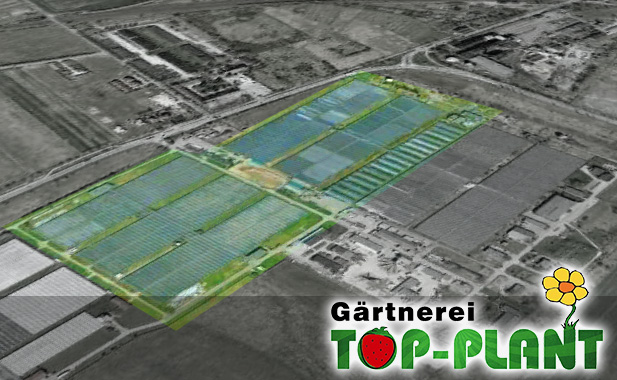 Hersteller von Obst Erdbeere - TOP-PLANT